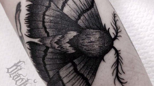 Tatuaggio falena-tattoo-falena-tatuaggio-blackwork-milano